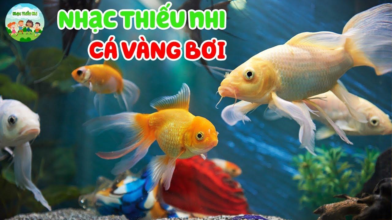 Nhạc Thiếu Nhi   Cá Vàng Bơi   Bé học động thực vật dưới nước   Ca nhạc thiếu nhi giúp bé thông minh
