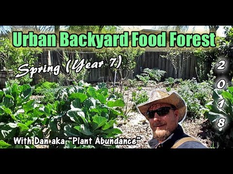 Dan's Spring Urban Backyard Food Forest Tour (Year 7) | Plant Abundance