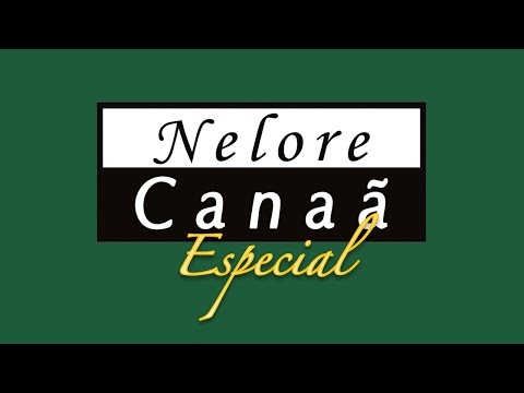Lote 12   Hard FIV AL Canaã   NFHC 1160 Copy