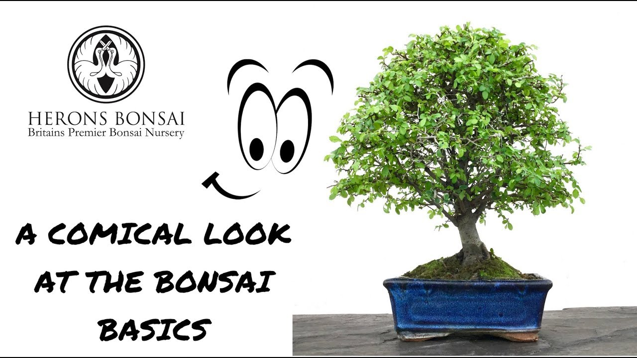 A Comic Look At The Bonsai Basics Youtube