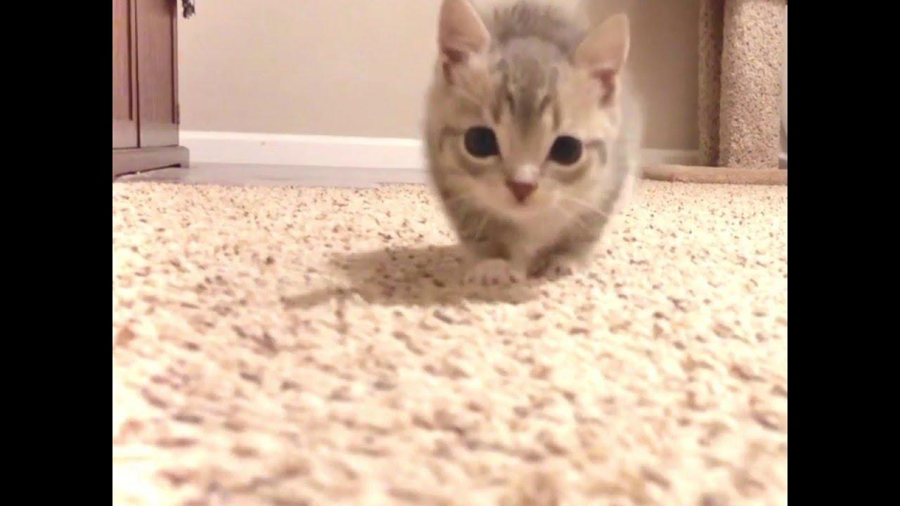Seriously Cute Kitten Stalks Camera    ViralHog