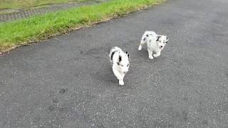 https://passerellewan.jp/puppies/?type=57.