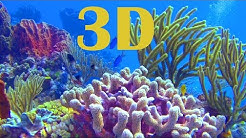 In 3D, The World Beneath The Ocean - A Underwater 3D Channel Film