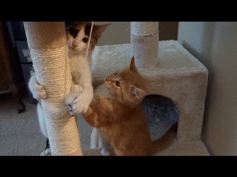 CUTE Kittens Play Together for First Time