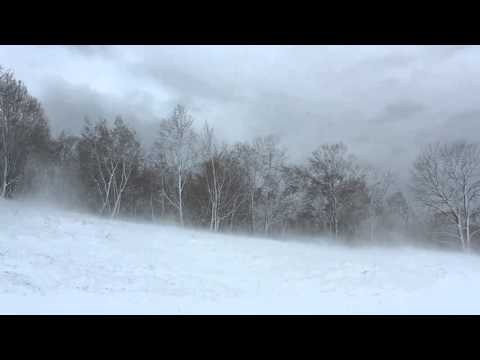 Winter Wind 1 Hour / Relaxing Snowstorm Sound, Winds Blowing Snow Across Forest Meadow