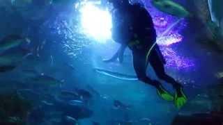Куала-Лумпур, #океанариум , #акулы , кормление рыб  дайвером