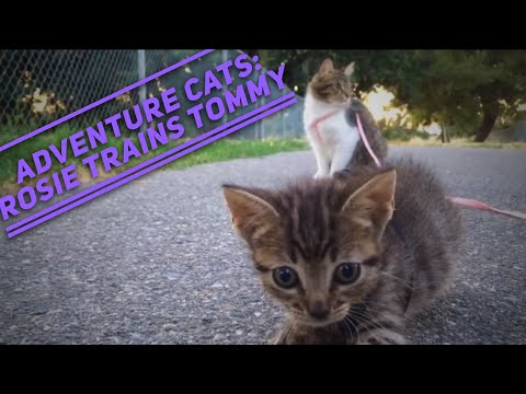 Adventure Cats Rosie and Tommy