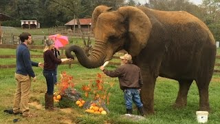 Incredible Moment Elephant Helps Man Propose To Girlfriend
