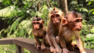 10 Things You Didn't know about MONKEY FOREST