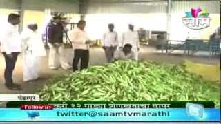 Vitthal Bachat Gat's baby corn success story