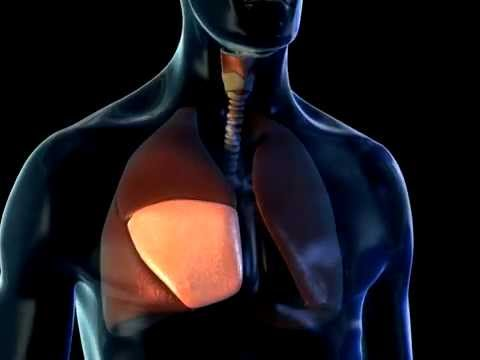 Lobes of the Lungs - 3D Medical Animation    ABP © - YouTube