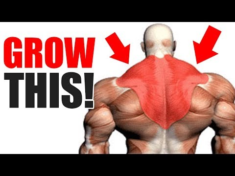 3 Best Exercises for BIG TRAPS!