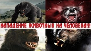 Нападения животных на человека! Animal attacks on people!