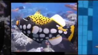 Fotospecialty mit Unterwasserspezialist Oliver Rieboldt
