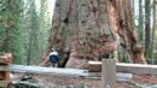 The Largest Sequoia Tree - General Sherman