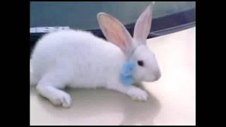 dany, mi conejo y yo:3