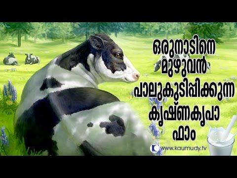 Thulasidhara Kurup's Krishnakripa Dairy Farm in Kerala | Haritham Sundaram | Kaumudy TV