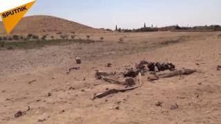 """الجيش السوري يدمر عن بعد سيارتين انتحاريتين لـ""""داعش"""" شرق حماة (فيديو + صور)"""