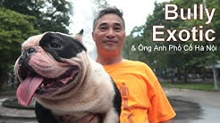 Ông Anh Phố Cổ Hà Nội - Chăm Chó Bully Exotic - Chất Hơn Nước Cất/ NhamTuatTV - Dog in Vietnam
