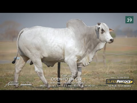 LOTE 39 - CLRP 2312