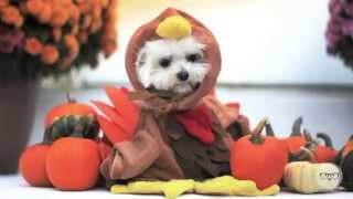 Happy Thanksgiving from Milo Meets World!