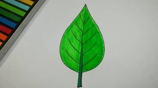 HOW TO DRAW LEAF COLOR FOR KIDS AND BEGINNERS l DRAWING AND COLORING
