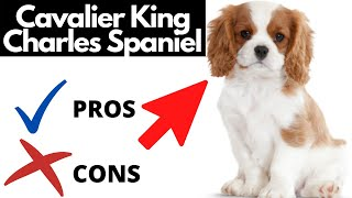 Cavalier King Charles Spaniel Pros And Cons | The Good AND The Bad!!