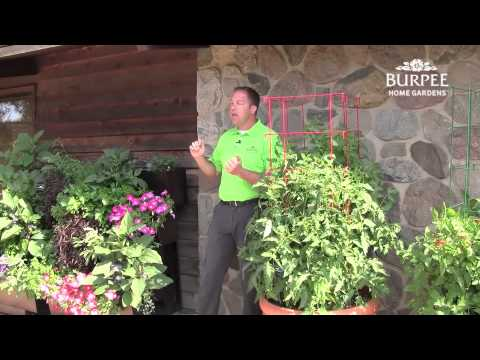 New Vegetables for Small-Space Gardens - 2015