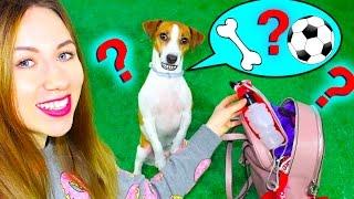 СОБИРАЙСЯ СО МНОЙ ГУЛЯТЬ С СОБАКОЙ GRWM | Elli Di Pets