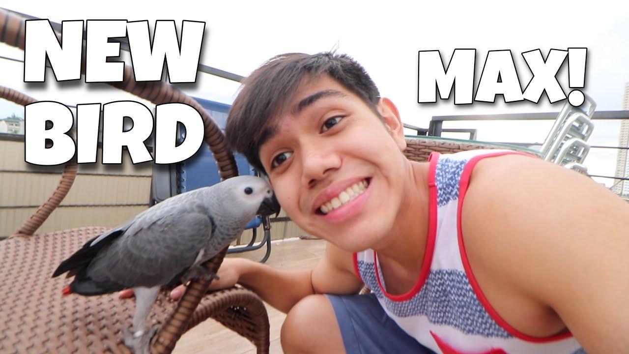Download NEW BIRD MAX! Bagong member ng ating pamilya isang african grey parrot! (FREE FLIGHT)   Murillo Bros