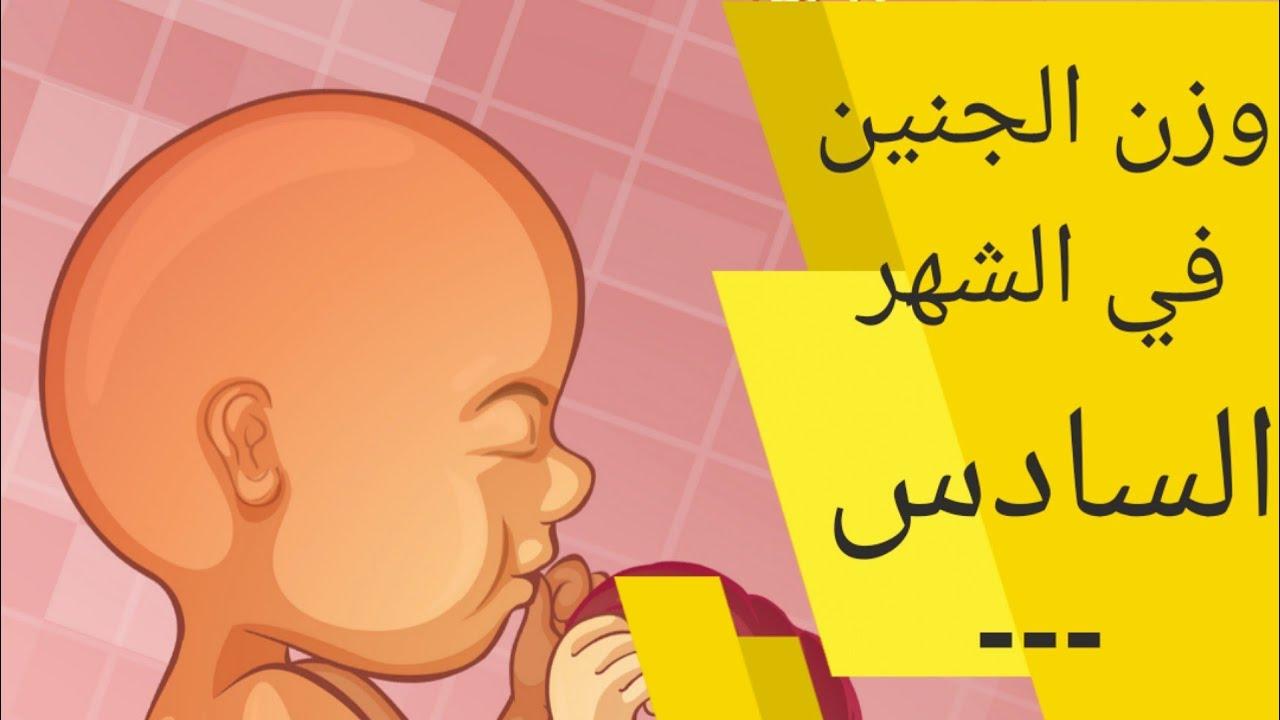 وزن الجنين في الشهر السادس من الحمل حجم الجنين في الشهر السادس الوزن الطبيعي للجنين الشهر السادس Youtube