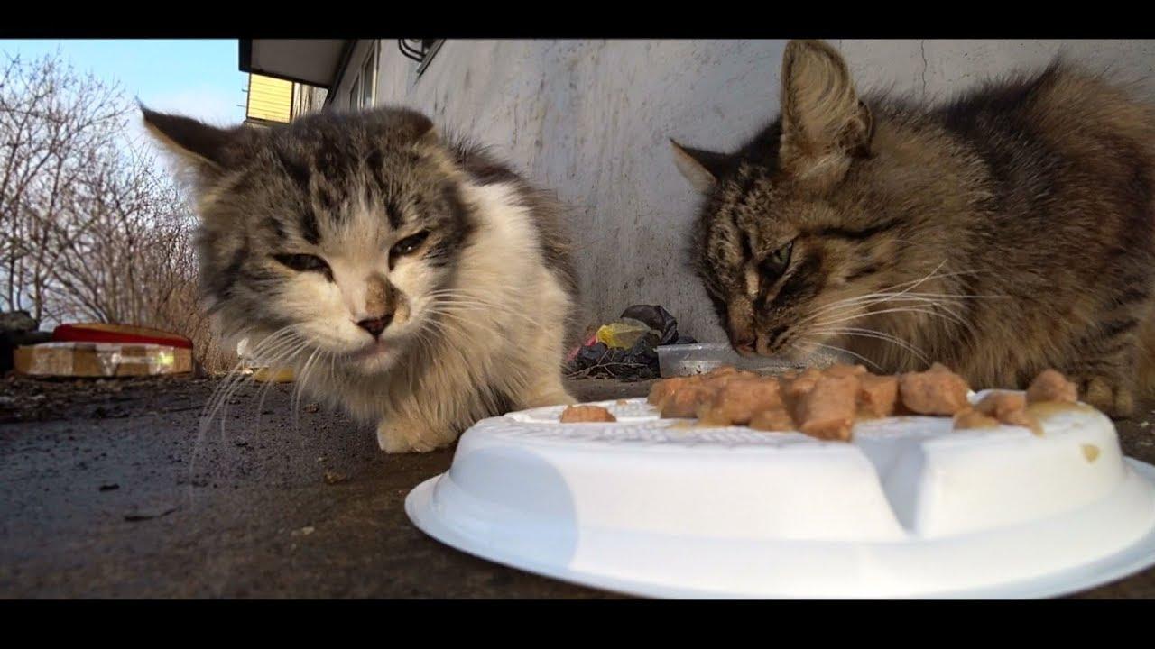 Как кормят бездомных кошек фото