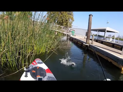 Kayak Bass Fishing At Bass Fest 2017 And Flying Fish!