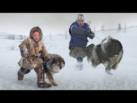 These Are 10 Ultimate Cold Weather Dog Breeds