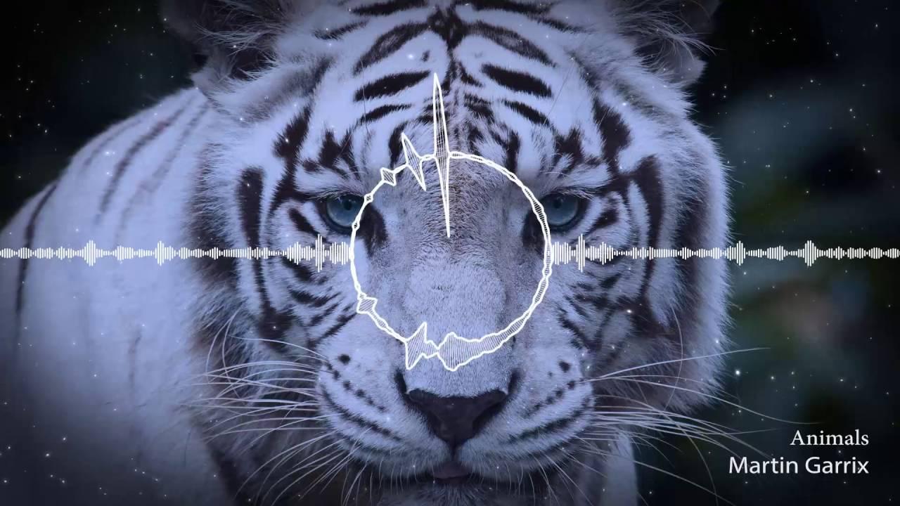 nhạc điện tử martin garrix animals youtube
