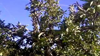 Ochs Orchard, Warwick, NY