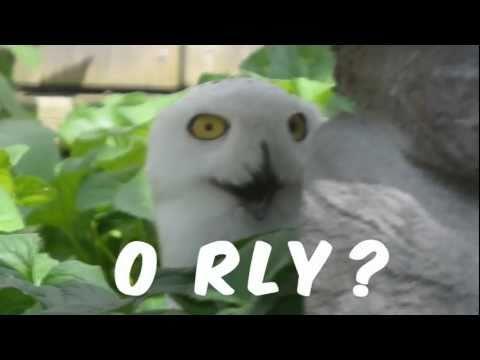 O Rly??? Owl Again!