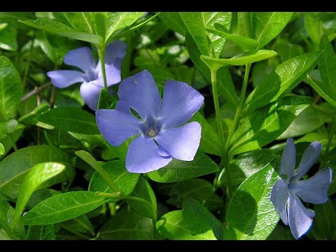 Лекарственные растения - перечень лекарственных трав с