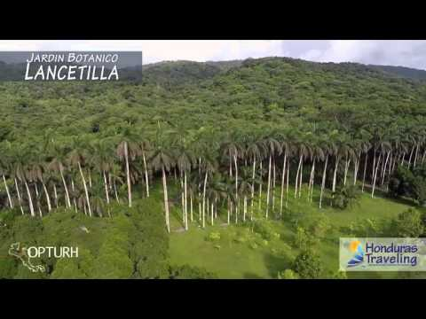 Tela Honduras Traveling