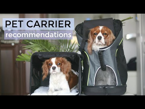 BEST PET CARRIERS  | Travelling with Dog Puppy | Sherpa Sleepypod Go Fresh Pet