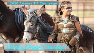 How To Train Your Donkey Dragon, Arizona TIP Challenge Youth Burro Champions!