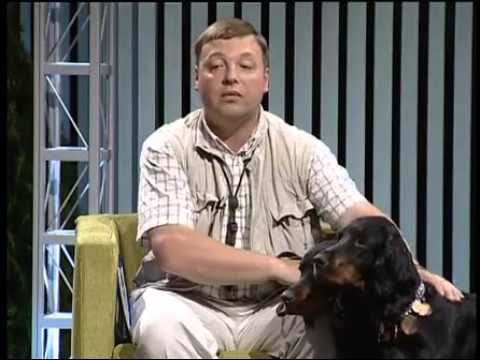 Охота и охотничьи собаки » OhotaTV   Охота видео онлайн   Mozilla Firefox