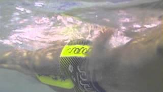 Style1水泳動画 オルタネイト クロールのストローク長を長くする...