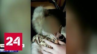 Пропавшую девочку нашли живой в подвале - Россия 24