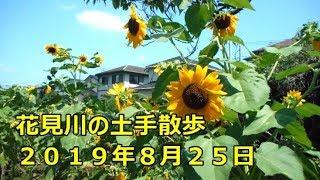 花見川の土手散歩 2019年8月25日