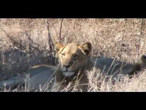 AFRICA! Kruger Safari