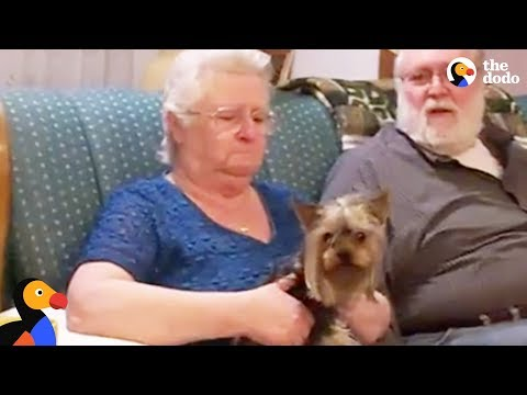 Grandma Gets Puppy Surprise From Her Family | The Dodo