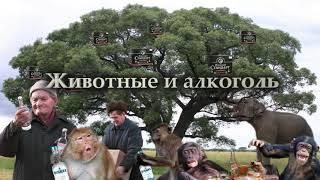 С. Савельев  Животные и алкоголь