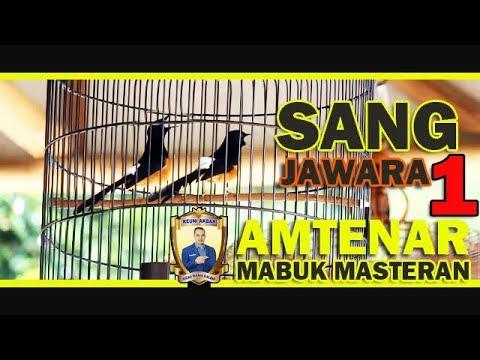 REUNI AKBAR KM : Sang Jawara MURAI BATU AMTENAR Milik Agus Zhang Mabuk Masteran