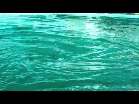 Spirulina pond - www.algenebiotech.com - Spirulina manufacturer- India.flv